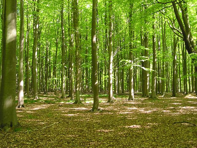 woodlands-management